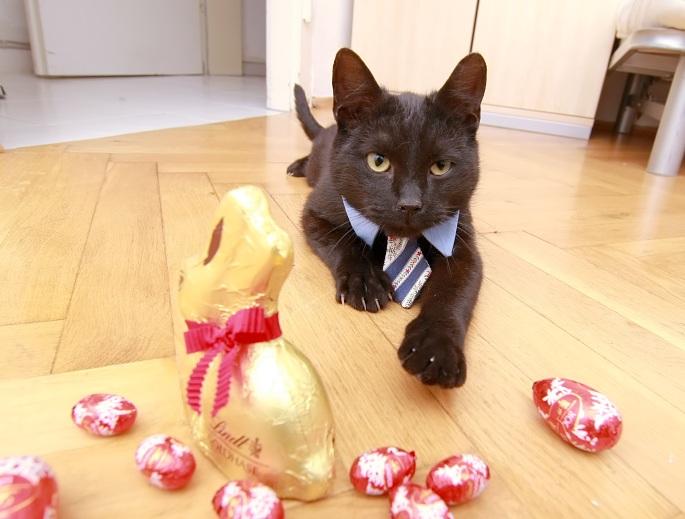 Frohe Ostern Katzenherz
